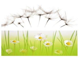 Blumenwiese von Angelika Ackermann
